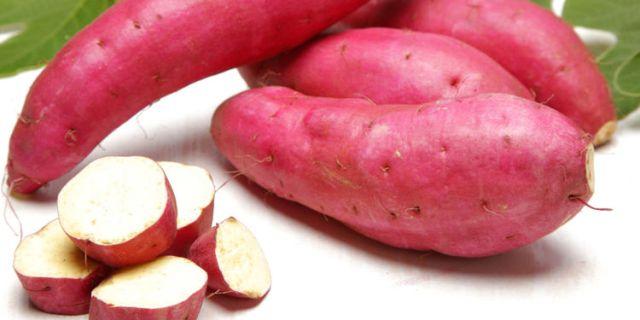 comment-cultiver-la-patate-douce