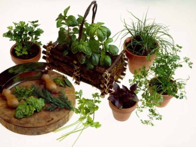 horta ceseira