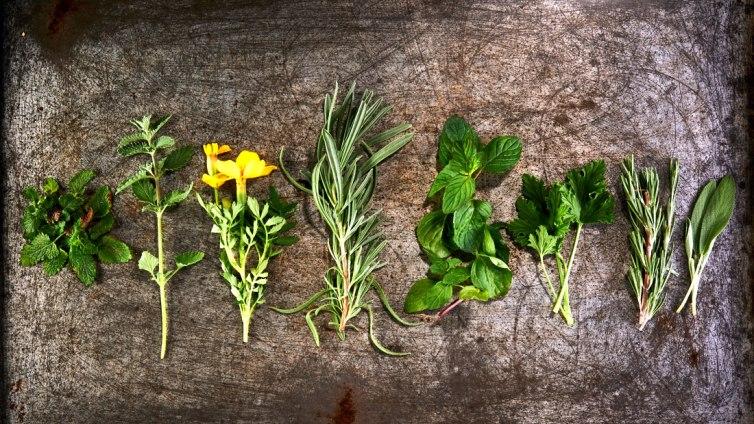 Plantas que atuam como repelentes naturais - Plantas ahuyenta mosquitos ...