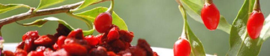 Conheça os 11 benefícios do Goji berry!