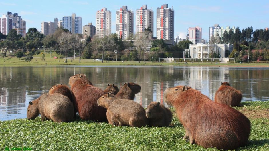 Curitiba - Minha cidade pelo meu ponto de vista