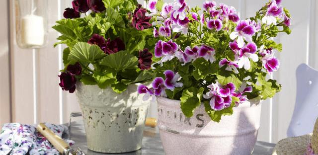 flores-roxas