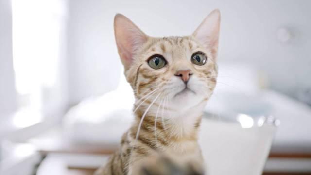 casa com gatos - blog pitacos e achados