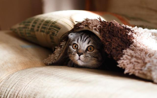 Decoração para casas com gatos