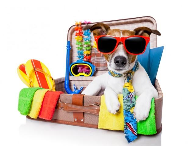 5 dicas essenciais para viajar com seu pet no fim de ano