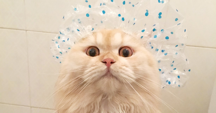 Como tratar pulgas em filhotes de gatos - pitacos e achados.jpg