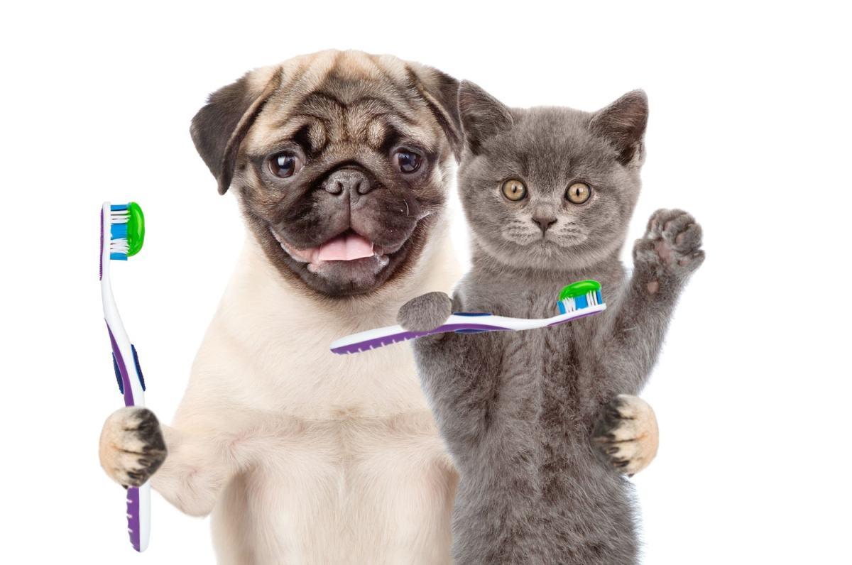 A importância do cuidado com os dentes do seu animal